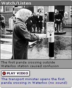 Panda_crossing
